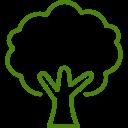 Drzewka liściaste do domu