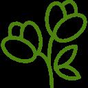Drzewka z kwiatem